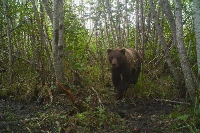 A Bear Emerges